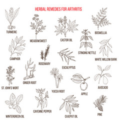Best herbal remedies for arthriris vector