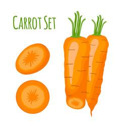 carrots setcartoon flat style vector image