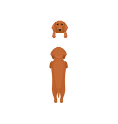 Flat set of dog poses front and back view vector