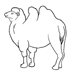 outline bactrian camel vector image