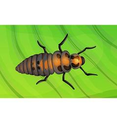 Ladybug life cycle vector