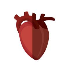 heart organ healthy design graphic vector image vector image