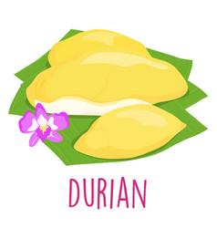 durian thai popular fruit white background vector image vector image