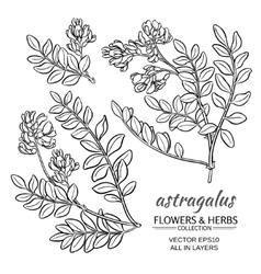 Astragalus set vector