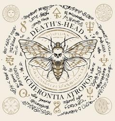 Mole acherontia atropos with old magic symbols vector