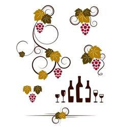 Grape vines wineglasses and decorative elements vector image