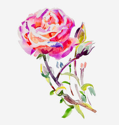 Original hand painting watercolor rose vector
