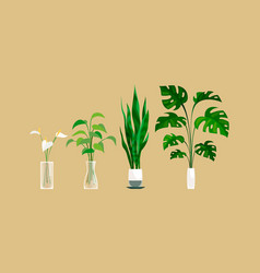 Plants in pot exortic ficus and monstera vector