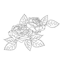 amazing beautiful hand drawn bouquet of peonies vector image