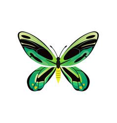 Ornithoptera priamus poseidon vector
