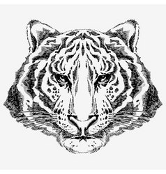 tiger drawn vector image