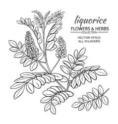 With liquorise plant vector