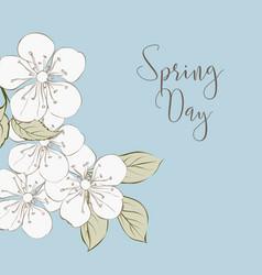 white cherry blossom flowers vector image vector image