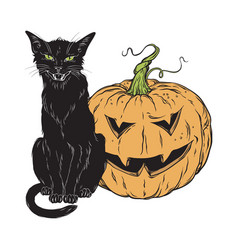 black cat sitting with halloween pumpkin isolated vector image