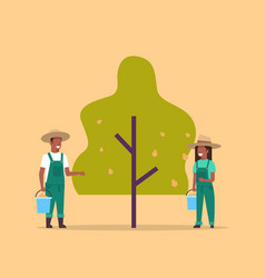 couple farmers picking pears from tree african vector image