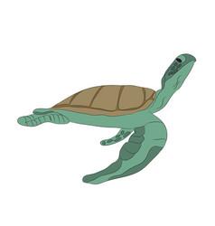 green turtle swim drawing vector image