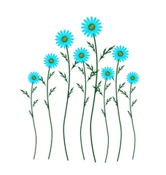 Light Blue Daisy Blossoms on White Background vector