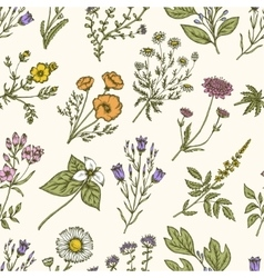 Wild flowers and herbs Seamless floral pattern vector