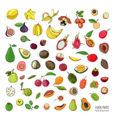 Exotic tropical fruits hand drawn set collection vector