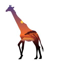 african zebra silhouette template vector image vector image