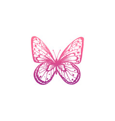 butterfly elegant butterfly vector image