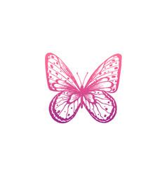 butterfly elegant vector image