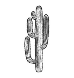 Cactus plant isolated sketch scratch board vector