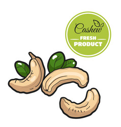 colored cashew on white vector image