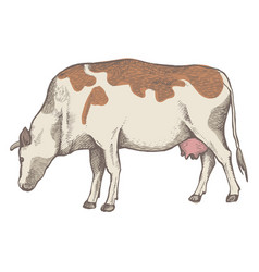 cow is eating grass vector image