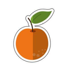 cartoon orange citrus fruit icon vector image vector image