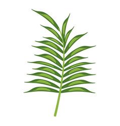 Leave palm tropical flora vector