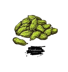 Cardamom seed heap hand drawn vector