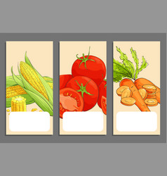 fresh vegetable cards vector image