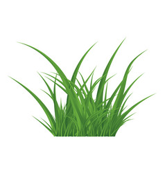 Green grass isolated symbol icon design vector