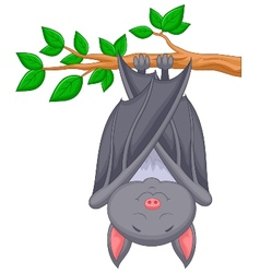 Cartoon bat sleeping vector image