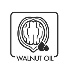 walnut oil drop and natural product ingredient vector image