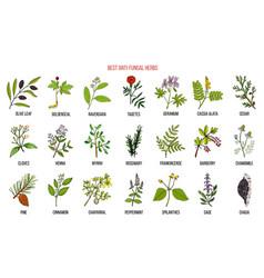 Best anti-fungal herbs set vector