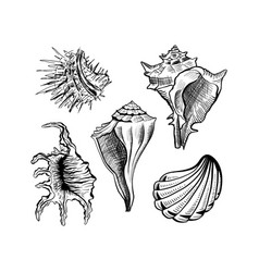 seashells hand drawn ink pen sketch set vector image