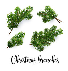 set of fir branches christmas tree pine conifer vector image
