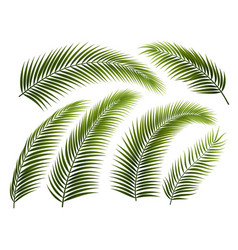 Set palm branches vector