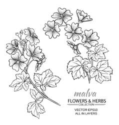 malva vector image vector image