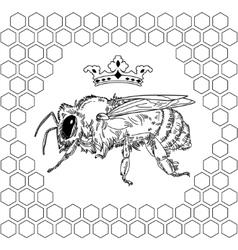 Bee queen honey vector