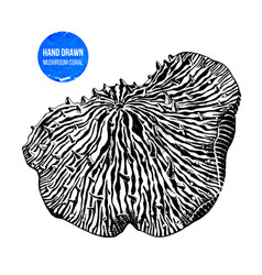 hand drawn mushroom anemone vector image