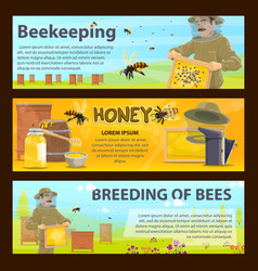 honey bee breeding and beekeeping farm banner vector image