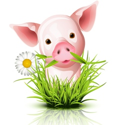 Little pig grass vector image vector image