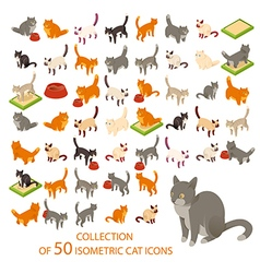 Cat cions vector