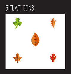 flat icon foliage set of frond foliage linden vector image