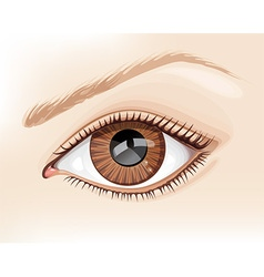 Graphic a brown eye vector