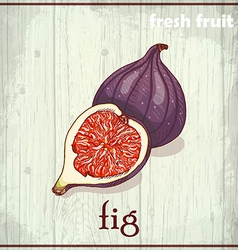 Hand drawing of fig Fresh fruit sketch background vector