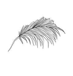 palm leaves sketch vector image